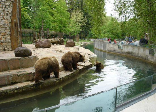 800px-Bears_in_Augsburg_Zoo