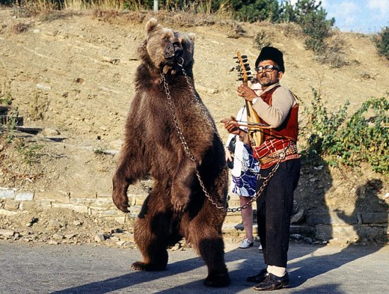 Dancing_bear_in_Bulgaria_about_1970_1