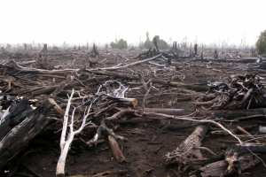 Rainforest-destruction-1024x768