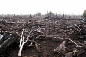 Rainforest-destruction-1024x768
